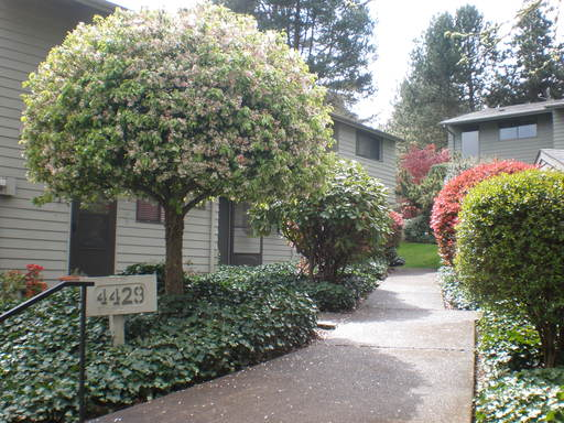 4429 Fox Hollow Road #2, Eugene, OR 97405